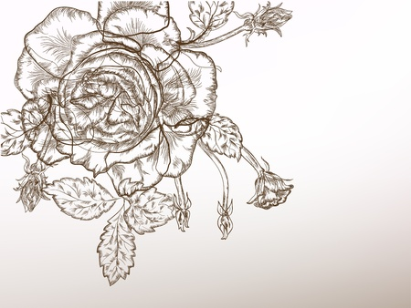 Beautiful rose vintage styled flower, black and white. Vector