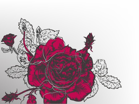 refine: Beautiful red rose vintage styled flower.