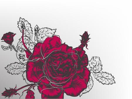 refine: Splendida annata rosa rossa in stile fiore. Vettoriali