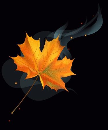 smock: Realistic orange autumn maple leaf on black background.  Illustration