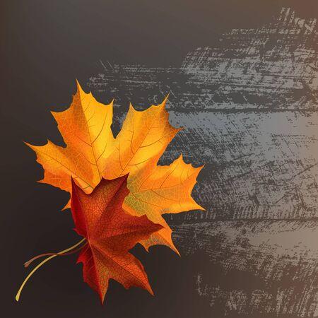 Autumn maple leafs on gray wooden texture surface.