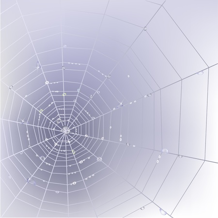 Stylish background with spider web with transparent shining water drops.  Vector
