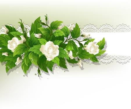 Beautiful background with fresh white roses. Vector