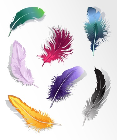 bird shadow: Set of 7 colorful feathers.
