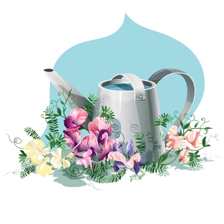 Metallic watering-can with sweet pea flowers. Vector