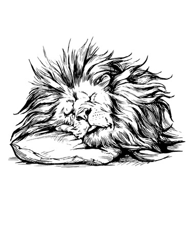 white cats: Vector hand drawn realistic lion sleeping character.