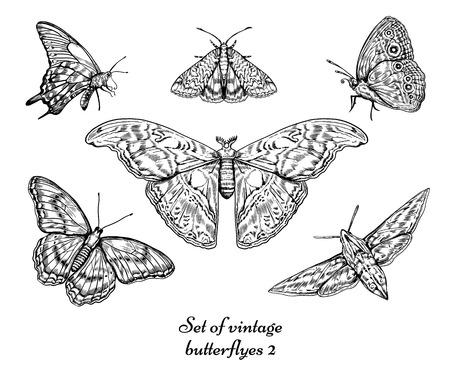 Vintage butterfly vector set illustration.