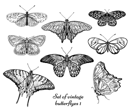 Illustration, vector, insects, set, butterfly, hand drawn, artistic, black & white, realistic, ink, drawing, hatching, stylish, vintage, decorative, refine, nature. Stock Illustratie