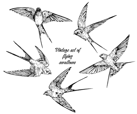 Hand drawn vector flying swallows vintage set. Çizim