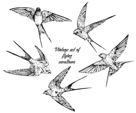 Insieme dell'annata di rondini volanti di vettore disegnato a mano. Vettoriali