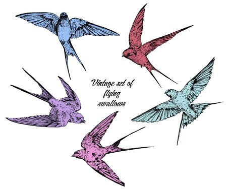 Hand drawn vector flying swallows vintage set in color. Çizim