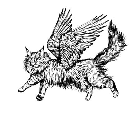 Vintage realistyc hand drawn flying maine coon cat.