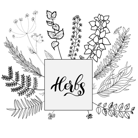 Herbs vector isolated set on transparent backgroung black and white