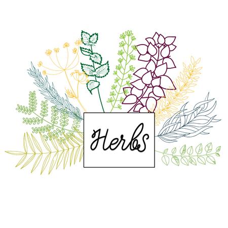 Herbs vector isolated set on transparent backgroung Ilustração