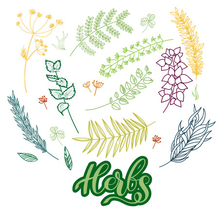 Herbs vector isolated set on transparent backgroung Imagens - 94109510