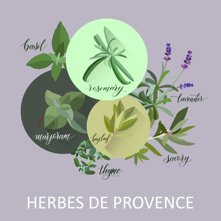 Herbs de provence. Hand written names. Aromatic cooking herbs