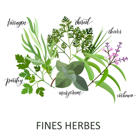 Fines Herbes set. Hand written names. Aromatic cooking herbs
