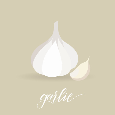 Garlic in flat style. Hand written text. Vector