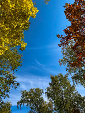 Autumn forest and blue sky in a sunny day