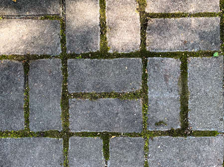 Paving slabs with moss. High quality photo