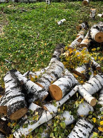 Birch log. Tree cut. High quality photo