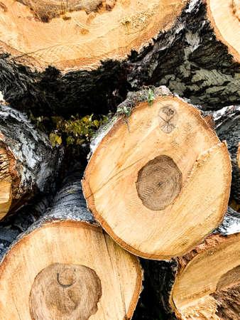 Wooden cut. Birch texture. High quality photo