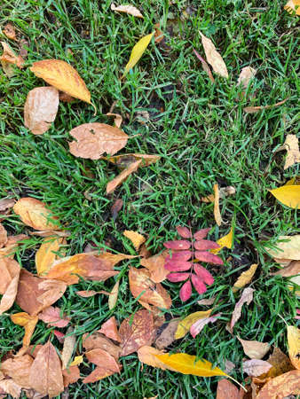 Autumn orange leaves on green grass. High quality photo Foto de archivo