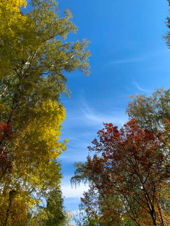 Autumn forest and blue sky in a sunny day 版權商用圖片 - 156310743