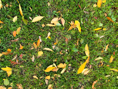 Autumn orange leaves on green grass. Fall. Natural background.