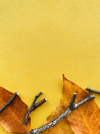Autumn leaves on a yellow paper background. Frame from leaves. High quality photo 版權商用圖片 - 156292033