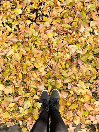 Autumn orange leaves on asphalt. Conceptual image of legs in boots on the autumn leaves