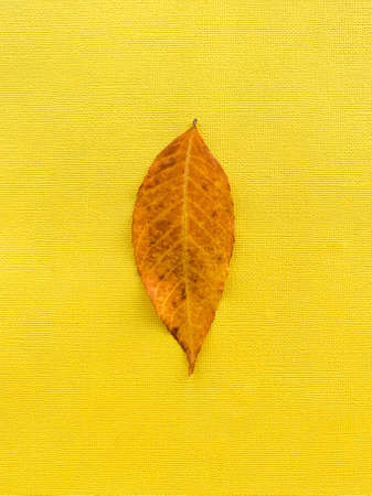 Autumn leaf on a yellow paper background. Brown leaf. High quality photo
