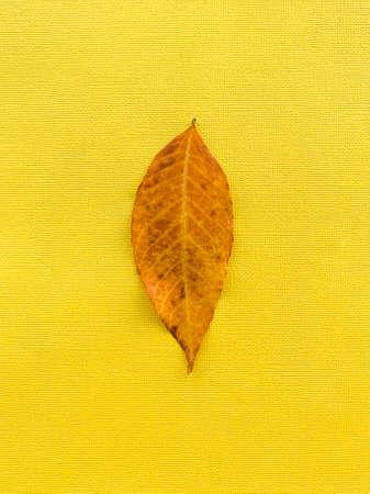 Autumn leaf on a yellow paper background. Brown leaf. High quality photo 版權商用圖片 - 156418191