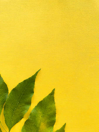 Autumn leaves on a yellow paper background. Green leaves. Frame with leaves. High quality photo