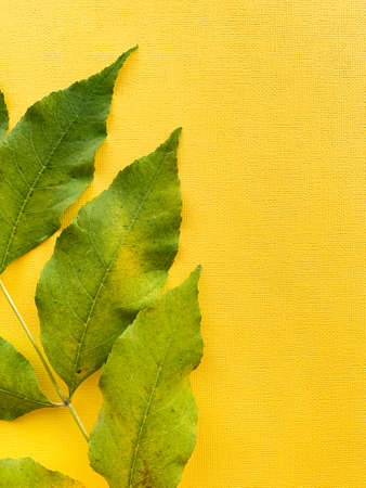 Autumn leaves on a yellow paper background. Green leaves. Frame with leaves. High quality photo 版權商用圖片 - 156494062