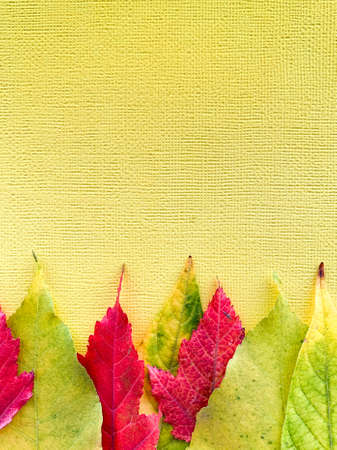 Autumn leaves on a yellow paper background. Frame with leaves. High quality photo Фото со стока