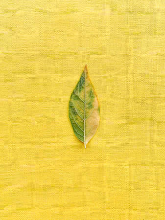 Autumn green leaf on a yellow paper background. High quality photo