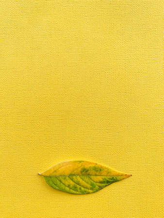 Autumn leaf on a yellow paper background. Frame with green leaf. High quality photo 版權商用圖片 - 157031496