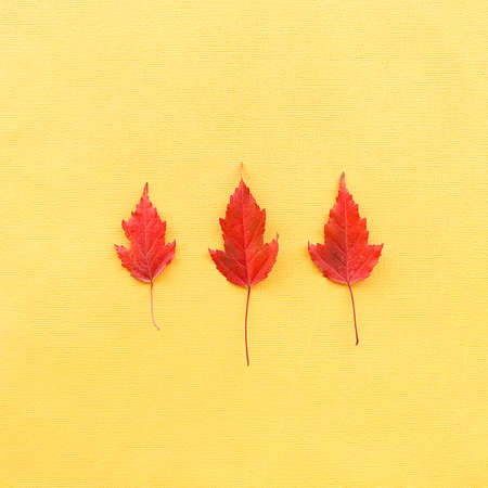 Autumn leaves on a yellow paper background. Three red leaves on paper. High quality photo