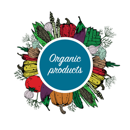 Organic vegetables. Natural farm products. Vector