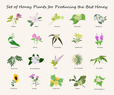 alfalfa: Honey planty set for produsing the best honey Illustration