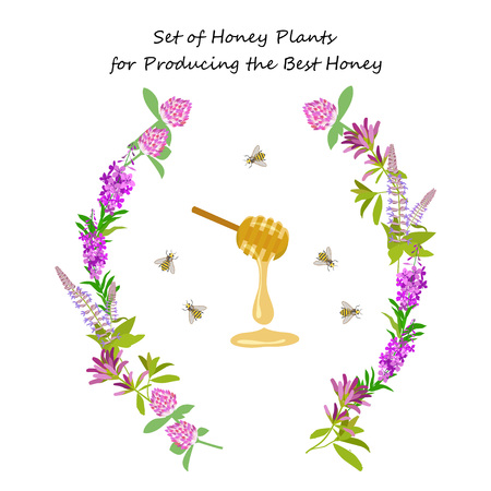palmetto: Honey plant set for producing the best honey for banner. Wild flowers and bee. Flat design botanical illustration Illustration