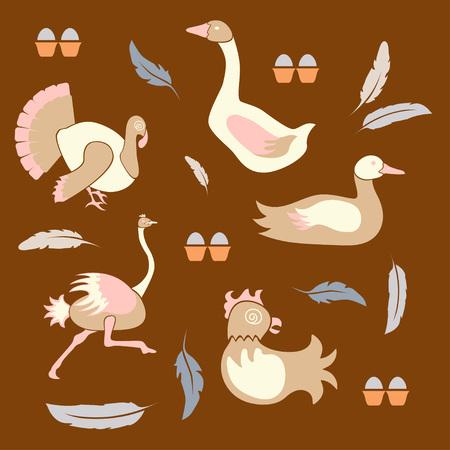 Set of poultry farm birds - chicken, hen, turkey, goose, duck, ostrich icons in modern flat design. Illustration