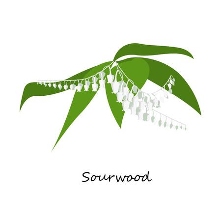 Sourwood Tree Blooms zuring boom Oxydendrum arboreum - wilde bloemen. een Noord-Amerikaanse boom van de heide familie, die zuur smakende blaadjes heeft. Plat ontwerp botanische Stock Illustratie
