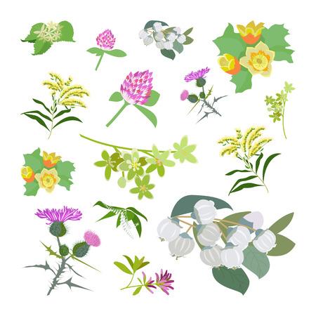 alfalfa: Honey planty set for produsing the best honey. Wild flowers. Flat design botanical Illustration
