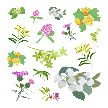 Honey planty set for produsing the best honey. Wild flowers. Flat design botanical Illustration