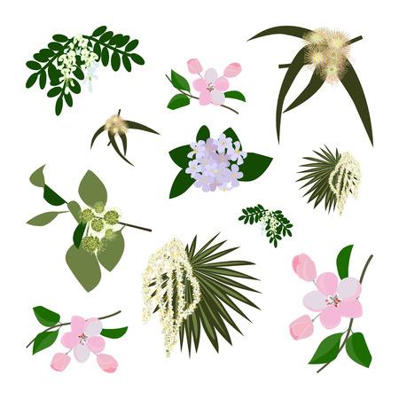 alfalfa: Honey planty set for produsing the best honey. Wild flowers. Flat design botanical vector illustration eps 10 Illustration