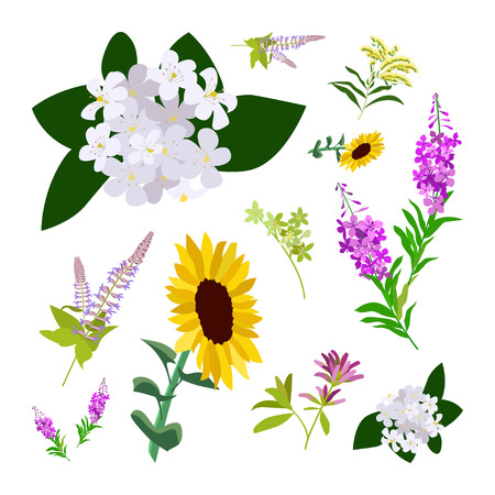Set of drawing wild flowers, herbs and leaves, painted field plants, botanical illustration in flat style, colored floral collection, hand drawn