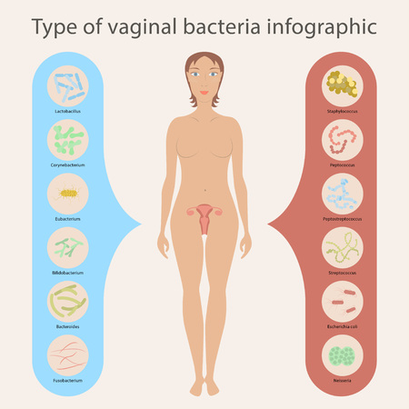 gynecology: Gynecology Vector illustration. Womans vaginal flora or microbiota in vagina, Good and Bad Bacteria