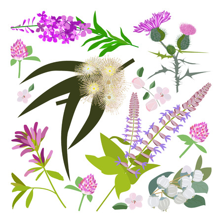 Set of drawing wild flowers, herbs and leaves, painted field plants, botanical illustration in flat style, colored floral collection